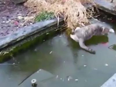 这只猫要捕冰面下的鱼 结果摔惨了