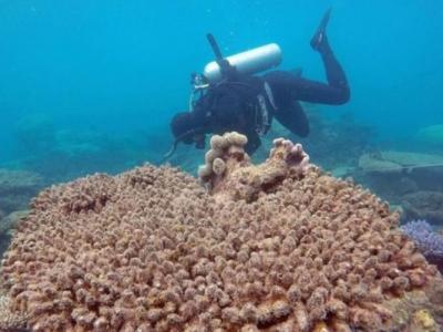 气候转变水温上升 澳大利亚大堡礁北面67%珊瑚死亡