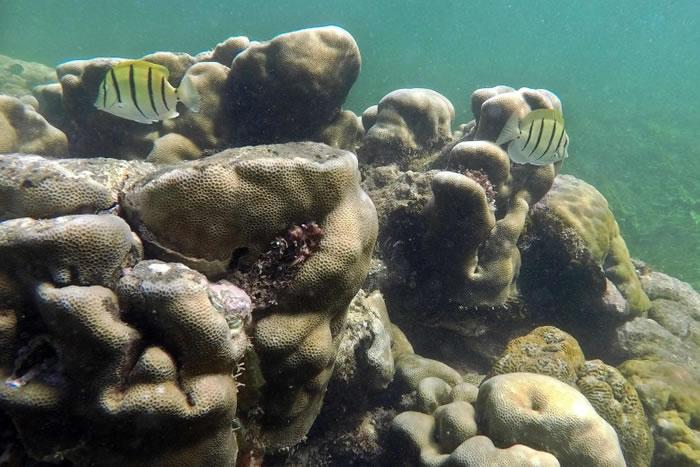 帕泰岛海域有颇为丰富的珊瑚资源。