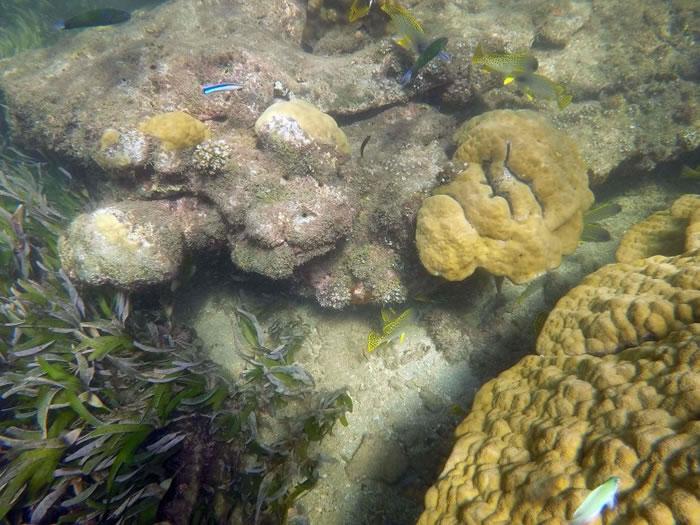随着人类的过度开采,大海内的生物亦愈来愈少。