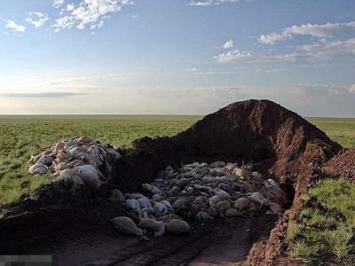 BBC行星地球(地球脉动)II目击震撼场面:哈萨克15万高鼻羚羊集体离奇死亡