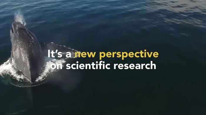 使用无人机收集鼻涕,不用开船靠近鲸鱼,减少噪音对鲸鱼的干扰