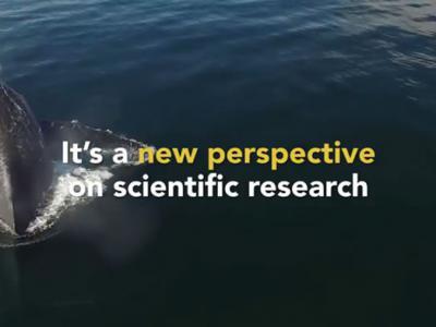 """想要知道大海中的鲸鱼健康状况 可以透过""""鼻涕机器人""""采集鲸鱼鼻涕"""