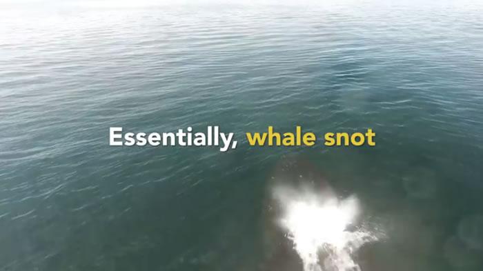 用无人机搜集「鲸鱼鼻涕」