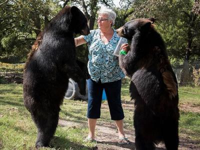 美国德州62岁妇人饲养2只大棕熊和1只白虎当宠物