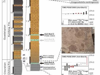华南锆石测年精确标定国际地层表瓜德鲁普统底界年龄