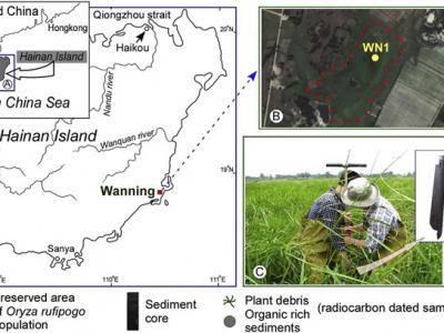 研究结果表明早在5600年前稻作农业已扩散至海南岛