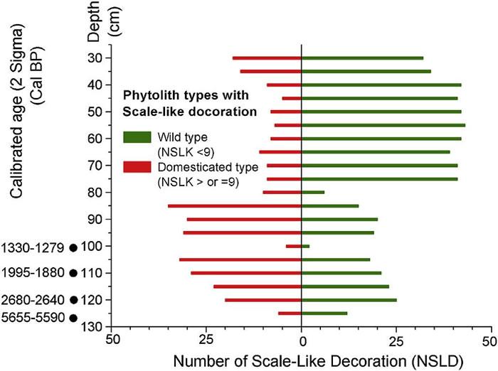 钻孔中发现的稻属植硅体野生与驯化类型在时间序列上的变化