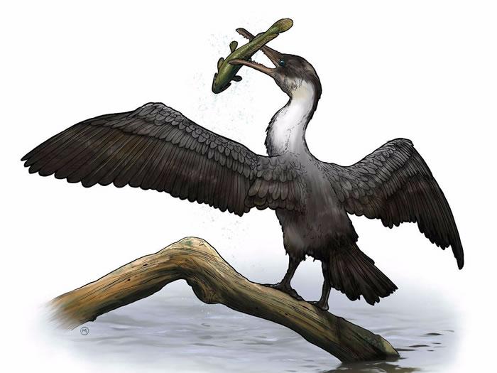 美国古生物学家在北极发现9000万年前的鸟类骨骼化石——Tingmiatornis arctica