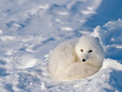 野外动物应对冬天严寒的小绝招