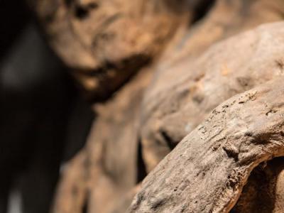 立陶宛教堂内的孩童木乃伊身上惊现最古老天花病毒