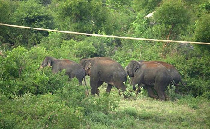 尼泊尔西南部大象袭击村落