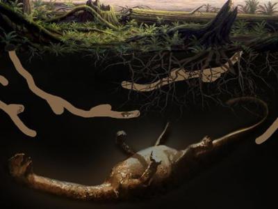 四川自贡发现侏罗纪时期的四足动物巢穴遗迹