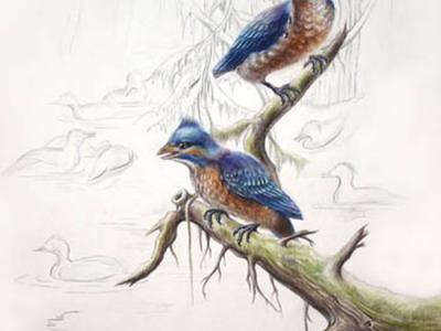 """新发现反鸟类化石""""四合当孤反鸟""""揭示早白垩世反鸟类复合骨愈合顺序"""