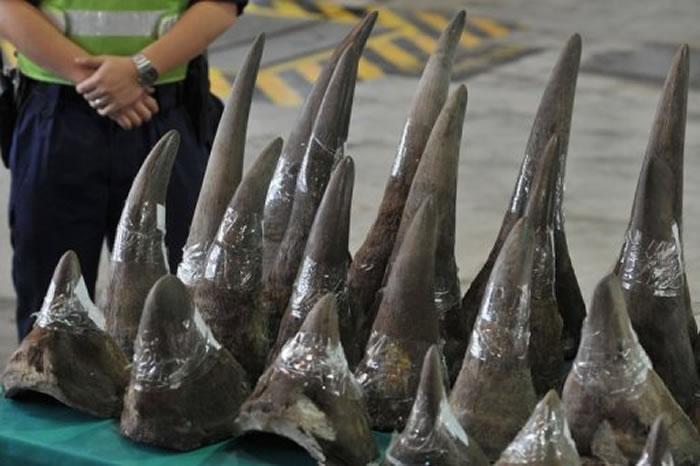 国际间积极打击非法野生动物制品交易,宣导「犀牛角并无药用价值」,却还是无法阻止盗猎者猎杀犀牛、盗取犀牛角的行为。