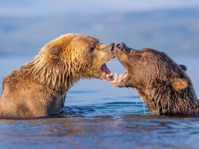 俄罗斯熊伴侣在摄影师镜头前大演亲密