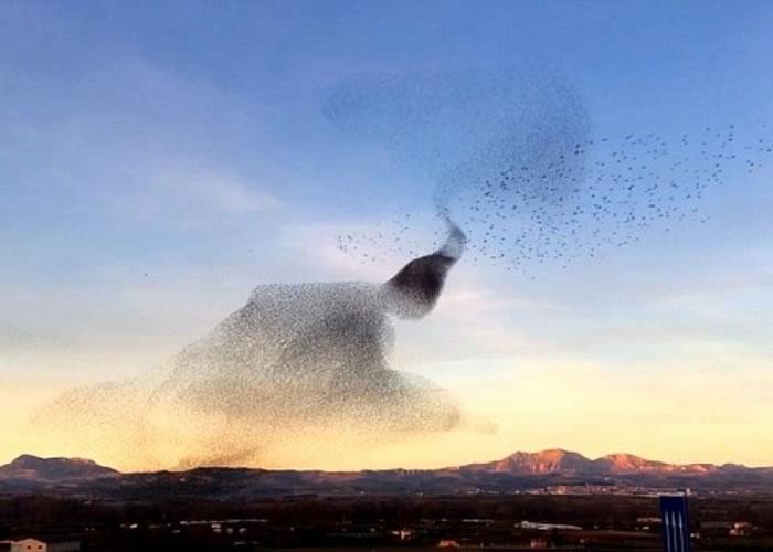 椋鸟群飞行的画面堪称自然奇观。