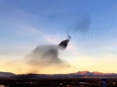 西班牙千只椋鸟翱翔 犹如空中沙画