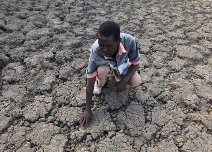 非洲近年受旱灾影响,农作物严重失收。