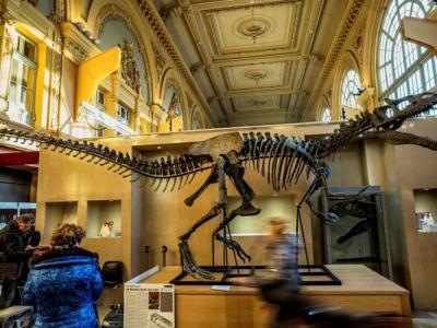 法国里昂拍卖一副侏罗纪时代近乎完整异特龙骸骨化石