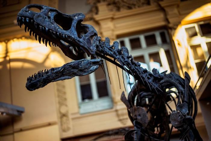 Kan的骸骨出土复原,展示它张口爬行凶猛的姿态。