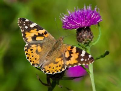 英国学者首测量昆虫迁徙 每年逾3万亿只昆虫飞越英国国境