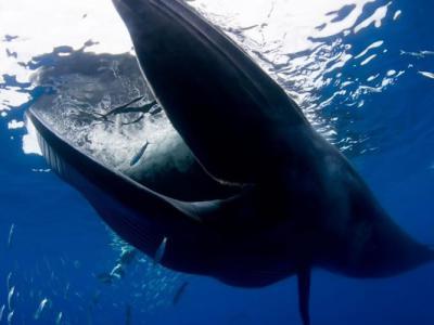 浮潜遇罕见布氏鲸 外国男子险被生吞