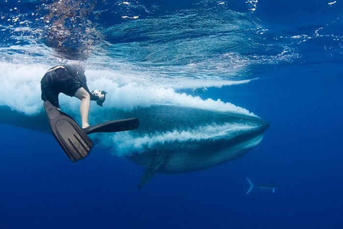 事主被拍到险成布氏鲸点心。
