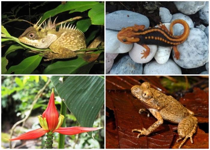 科学家在大湄公河地区发现大量新物种。