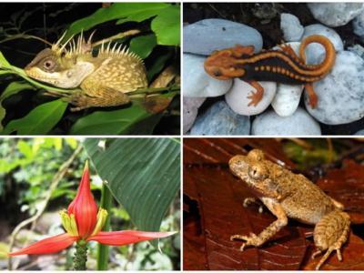 世界自然基金会(WWF):大湄公河地区发现多达163样新物种