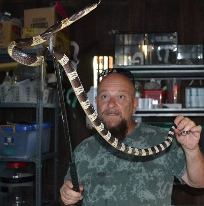 蛇王到场把毒蛇捉走,并放归大自然。