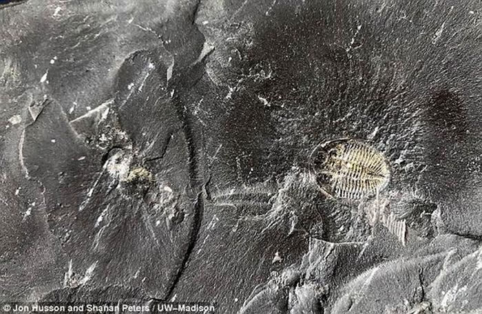 最新一项研究表明,植物化石燃料阻止更多碳与大气层中的氧气结合形成二氧化碳,导致大气层中氧气指数升高,促使5.41亿年前寒武纪生命大爆发。图中是黑色页岩形成于4.