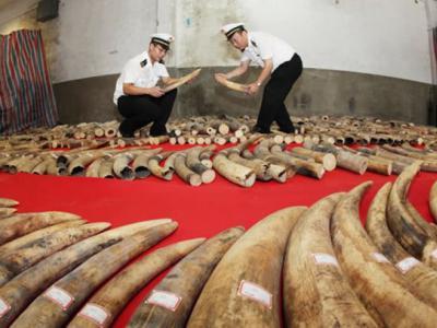 中国承诺于2017年底前停止象牙制品的国内商业性交易