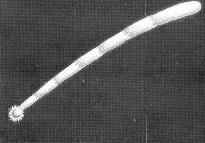 根据哈雷的计算,1680年的大彗星会每575年飞过地球一次。魏斯顿由此往前推算,指出这颗彗星在公元前2342年曾经造访过;据信大洪水就发生在那年。 PHOTOG