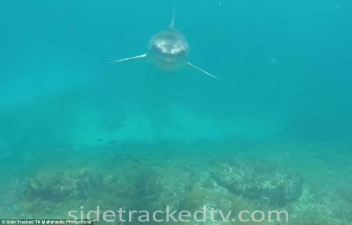 澳洲西澳省男子潜水拍摄海洋生物纪录片 误闯大白鲨地盘