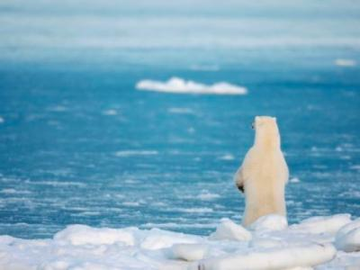 暖化致冰面融解 35年内北极熊数量或减30%