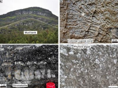 华南石炭纪生物礁的分布和演化研究新进展