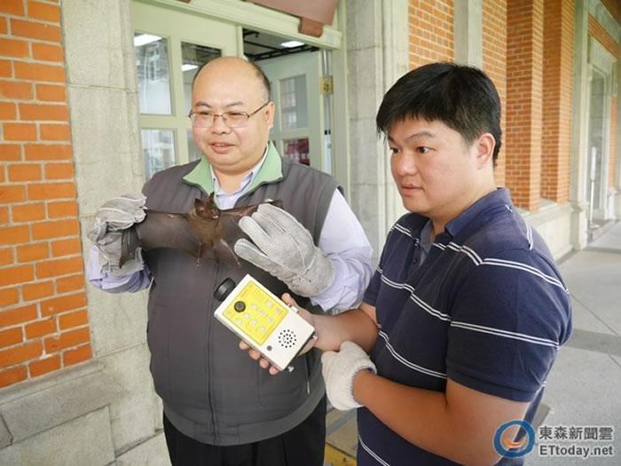 台师大生科系吴忠信教授团队,解开台湾蝙蝠迷航之谜。