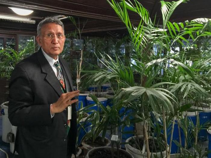 帕哈普尔商务中心(Paharpur Business Centre)执行长卡玛.麦铎(Kamal Meattle)在自己办公大楼的温室中种了四百株植物来净化室内