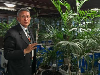 居家植物可净化雾霾?
