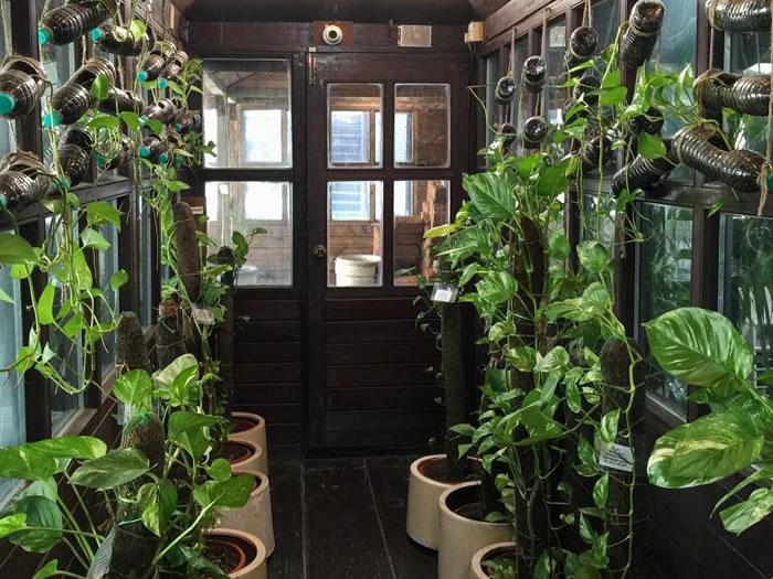帕哈普尔商务中心的温室主要栽种三种植物:槟榔树、虎尾兰和黄金葛。 PHOTOGRAPH BY WENDY KOCH