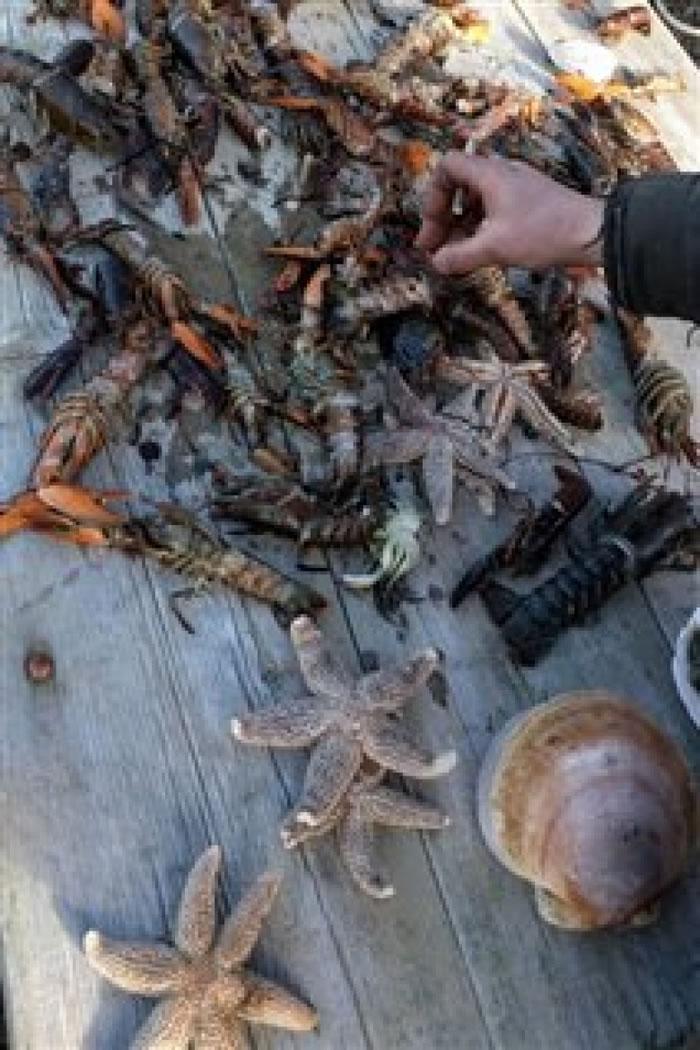 被冲上岸边沙滩上的鱼虾种类繁多。