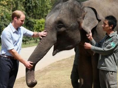 中国禁止象牙交易 英国威廉王子大赞:可打赢保育战争