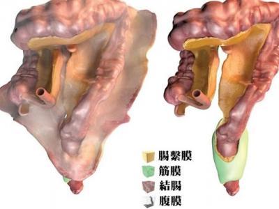 研究发现人体新器官 消化系统中的肠系膜其实是一个器官