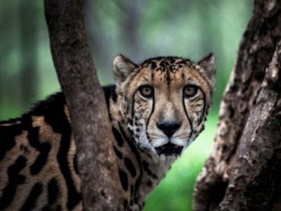 阿联酋宣布把私养野生动物定为非法 中东富豪不能再拖着大猫游荡了