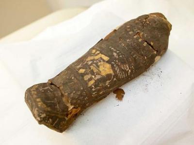 英国肯特郡博物馆发现2300年历史古埃及鹰木乃伊真身竟是流产人类胎儿