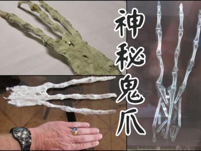 """秘鲁马丘比丘附近的库斯科古城地道发现有3只手指的巨型""""外星鬼爪"""""""