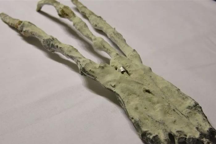 鬼爪的手指非常长。