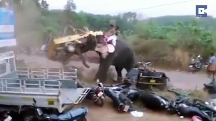 印度祭典上大象突然抓狂卷起小货车瞬间砸烂