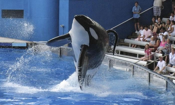 生物学家研究发现杀人鲸也有更年期